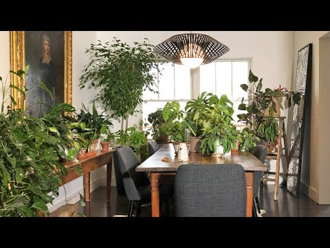 HOUSEPLANT TOUR / AMANDA'S LIVING AND DINING ROOMS