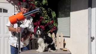Cocker Spaniel Grooming - Part 5 Of 7