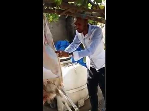 EXCLUSIVE VIDEO OF Animal Cruelity in West Africa.