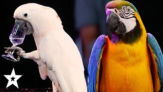 The Parrot Whisperer Brings Judge To The Stage on Germany's Got Talent 2020 | Got Talent Global