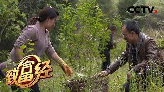 《致富经》 20200525 恩爱夫妻的艰辛创业路| CCTV农业