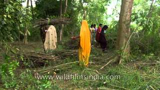 Selective timber collecting in the forest of Uttar Pradesh