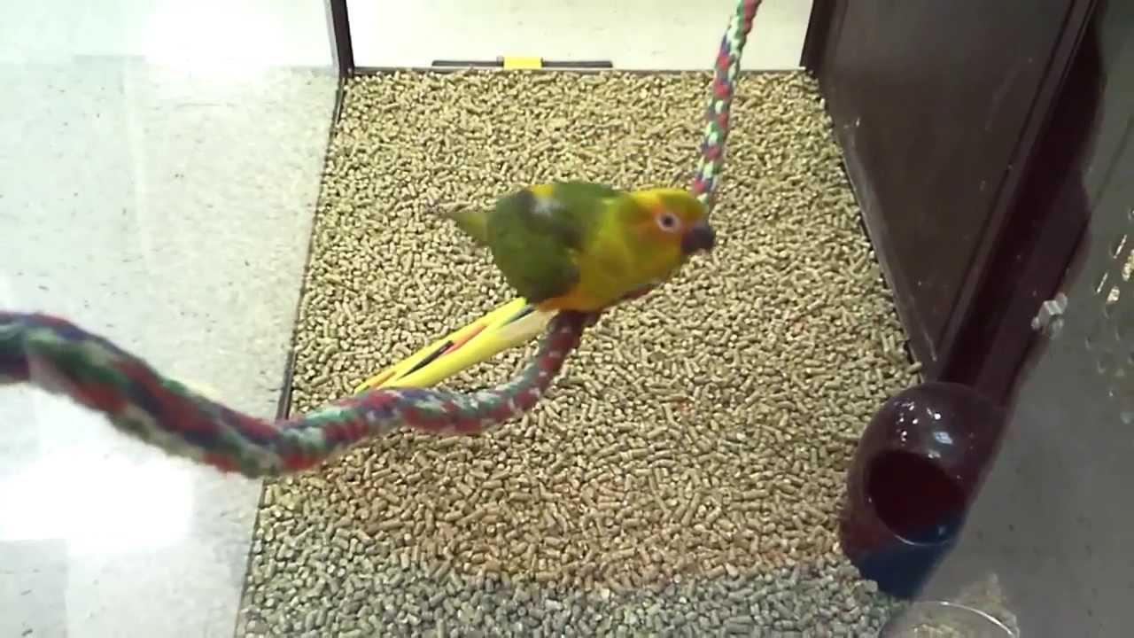 One Cool Bird Sun Conure Birdparrot At Petsmart 600 Bird 3