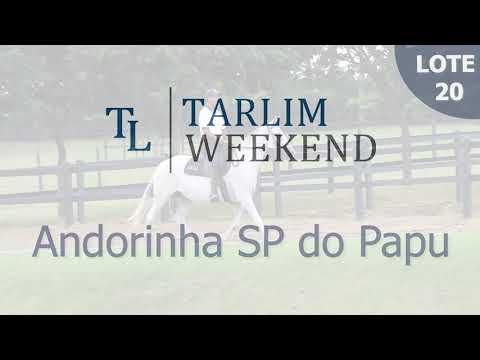 Lote 20 - Andorinha SP do Papu (6º Leilão Tarlim)