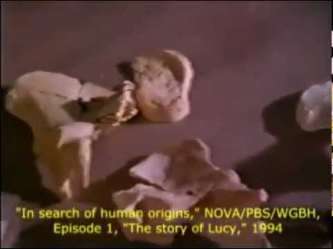 In search of human origins episode 1: The story of Lucy (PBS Nova, 1994)