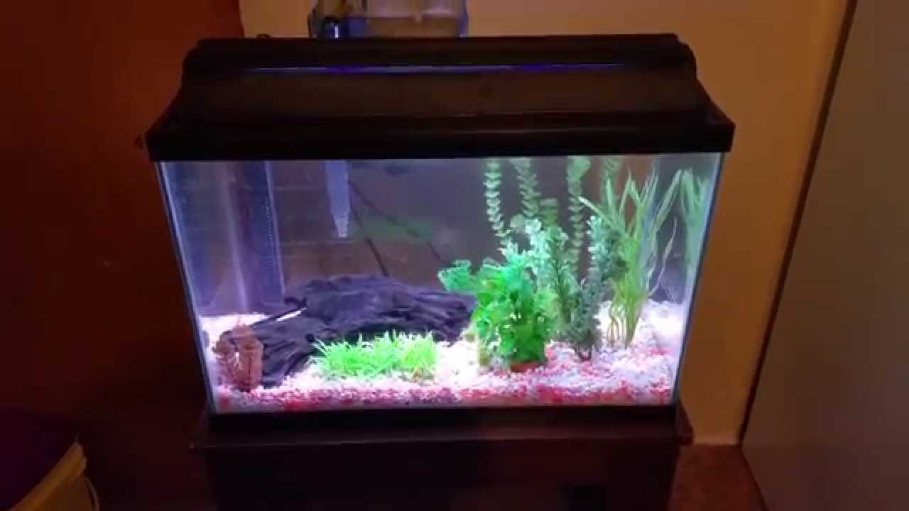 20 gallon fish tank youtube