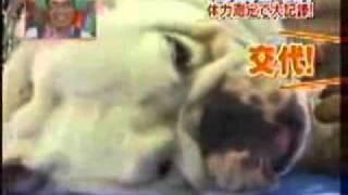 Monkey And Dog Training Push Ups