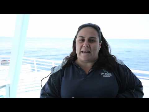 Whale Watching on L.A. Waterfront Cruises in Los Angeles