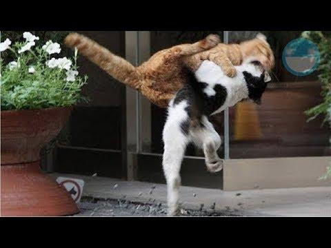 Las 5 PeIeas de Gatos más Épicas de Todos los Tiempos