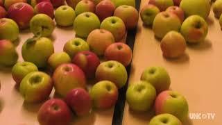 Hendersonville's Apple Scene   North Carolina Weekend   UNC-TV