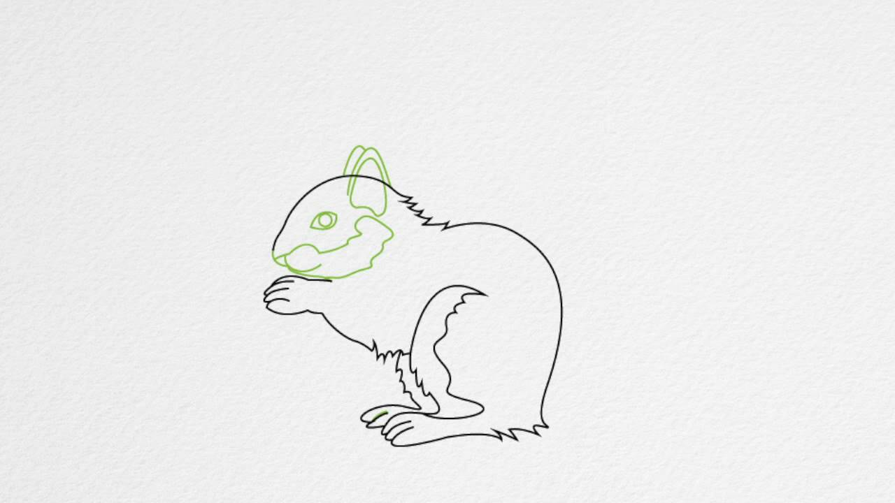 How to draw a SQUIRREL step by step YouTube