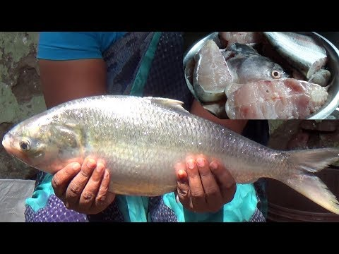 Pulasa Fish Cutting | Ilish Amazing Cutting Fish | How To Cut a Ilisha Fish Nicely
