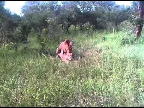 Michelle Conradie  -  Tintswalo Safari Lodge Trip January 2011.3GP