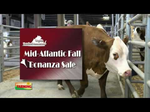 Virginia Farming: Virginia Hereford Association