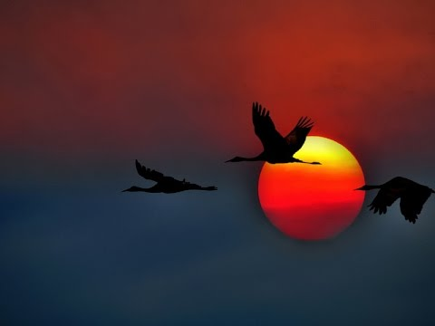 Фильмы о птицах онлайн » Дикий портал