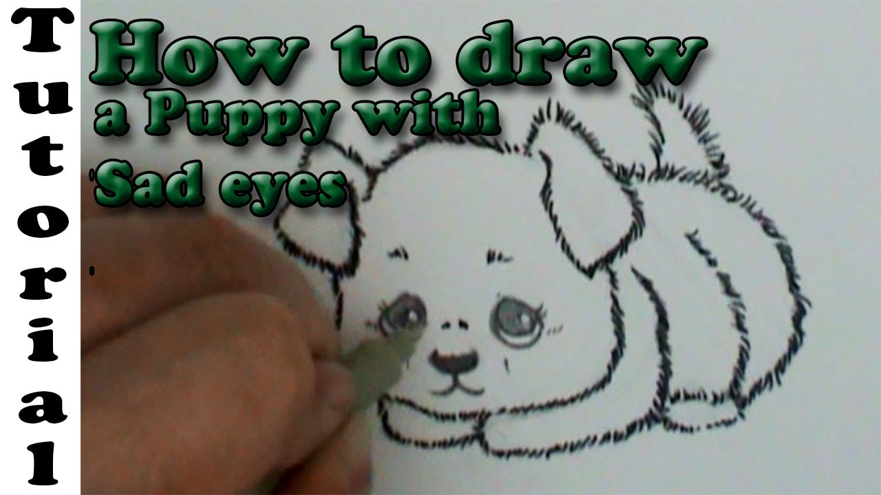 how to draw a fluffy puppy with sad eyes youtube