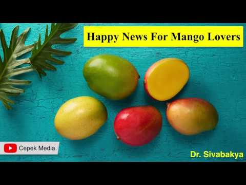 Happy news for Mango Lovers | Dietary | General Medicine