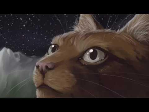 Top Ten Favourite Warrior Cat Tribe Names