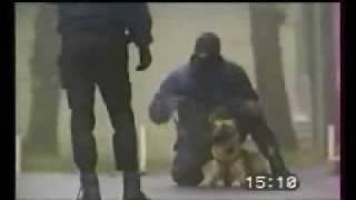 YouTube    اخطر كلب بوليسي في العالم 