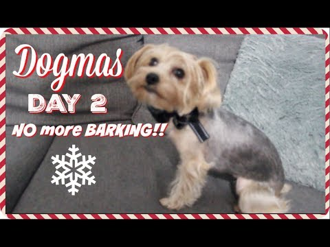 Dogmas Day 2 | BARK COLLAR Review