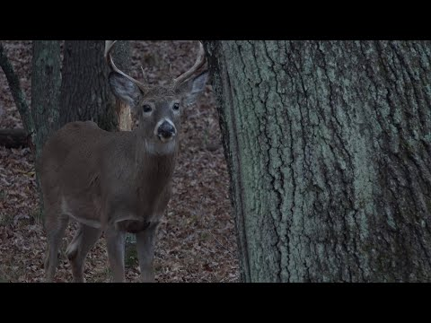 This One Factor Will Guarantee You'll See More Bucks
