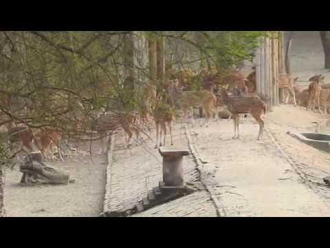 Garchumuk 58 gate Deer Park