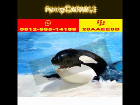 0812-985-14168,Fanny Capable,Contoh Logo Perusahaan Jasa, Logo Perusahaan Luar Negri.
