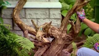 видео Рутарий в ландшафтном дизайне - как сделать сад корней своими руками