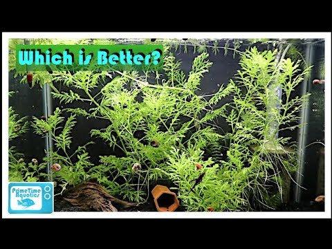Fish Tank Showdown 20 Gallon High Vs 20 Long Youtube