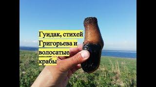 Гуидак, стихей Григорьева и волосатые крабы / Digging for Geoduck