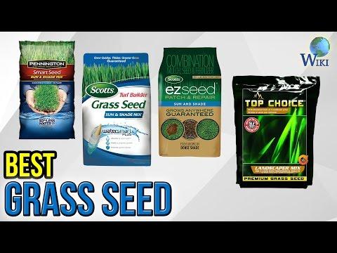 7 Best Grass Seed 2017