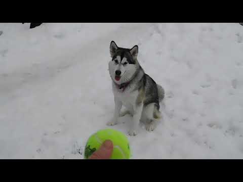 Corey Klug - Nice Little Fetch Session