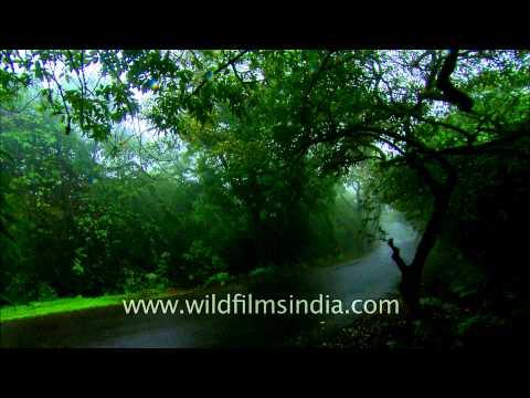 Mist covered road leading to Satara Hill station, Maharashtra