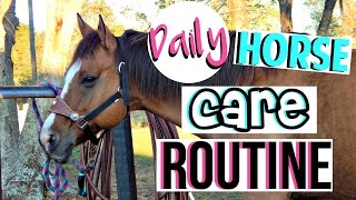 Daily Horse Care Routine
