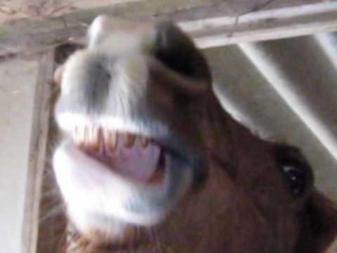 Sunny AKA Ed the talking horse