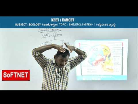 ZOOLOGY ||  Skeletol System - P1 || Praveen Kumar
