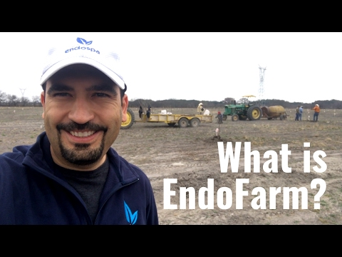 EndoFarm | Helping The Environment, Society and Charity | En