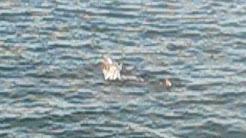 Dolphin Cruise in Corpus Christi