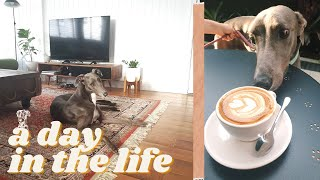 A DAY IN THE LIFE OF A RETIRED GREYHOUND | An update on George