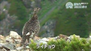 静岡市PRビデオ(富士山・歴史ほか)