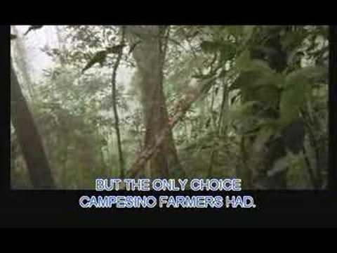 Trailer do filme Um Lugar Chamado Chiapas