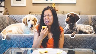 Can dogs understand EMOTIONS?   Labrador & German Shorthaired Pointer
