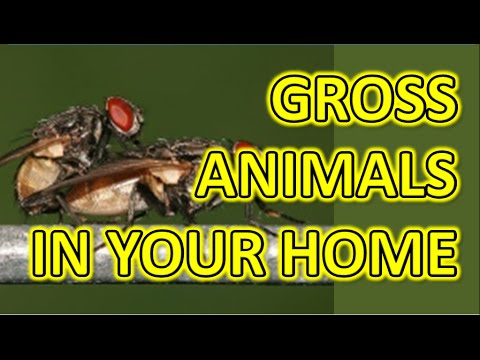 Top 5 - The Most Creepy Animals In Your Home - Warning! Disgusting Creatures!