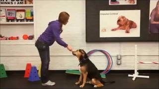 Dog Training Tips: How To Train Your Dog To Paw Or Shake