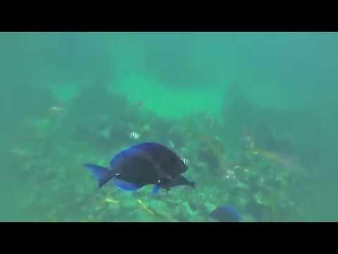 Dune Buggy and Snorkeling Adventure in Nassau