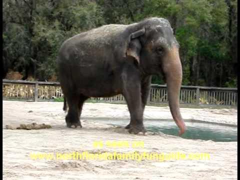 Central Florida Zoo And Botanical Gardens   Sanford, Florida   YouTube
