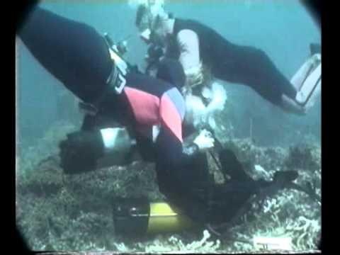 Formation plongée Marseille Aquadomia niveau 4  YouTube