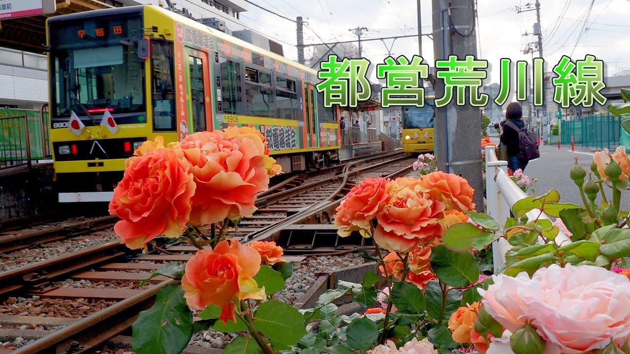 Rose Garden and Tokyo Sakura Tram.   #4K #都電荒川線 #東京さくらトラム