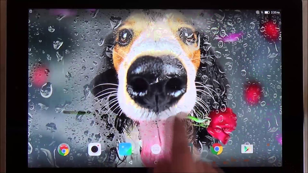 Animals Cute Live Wallpaper For Android Phones And Tablets