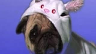 Pug Dog Halloween Costumes